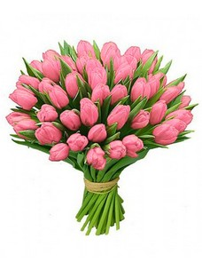 51 Тюльпан T067