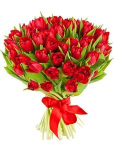 51 Тюльпан T069