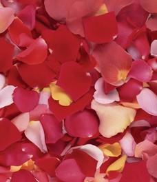 Купить лепестки роз минск